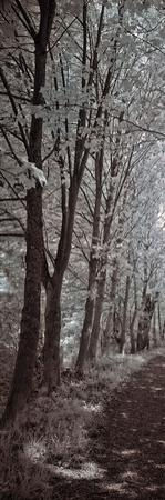 A Walk To Remember I by Ily Szilagyi