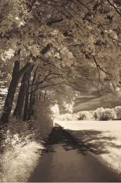 The Path Ahead by Ily Szilagyi
