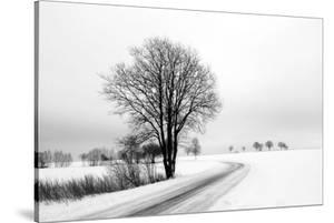 The Way Home by Ily Szilagyi