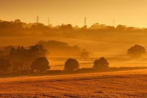 Golden Mist by Image by Chris Winsor