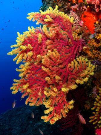 Coral Reef by Imagen Rafael Cosme Daza www.rafaelcosme.com
