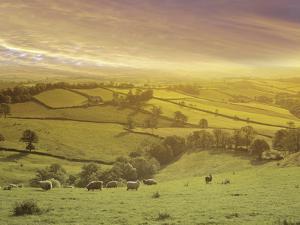 Rural Landscape by Images Etc Ltd