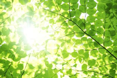 Low Angle View of Leaved by imagewerks
