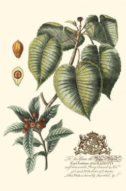 Imperial Foliage III