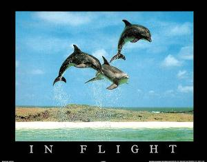 In Flight Dolphins Art Photo