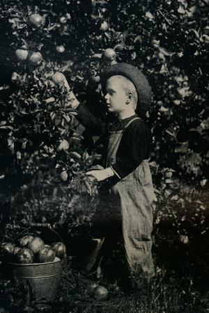 https://imgc.allpostersimages.com/img/posters/in-one-of-ontaario-s-fruitful-orchards-c1934_u-L-Q1EFB3P0.jpg?artPerspective=n