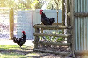 Farm Conversations by Incredi