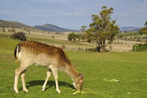 Feeding Deer by Incredi