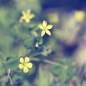 Little Yellow Flowers by Incredi