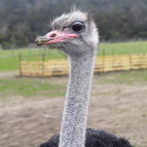 Ostrich Look by Incredi