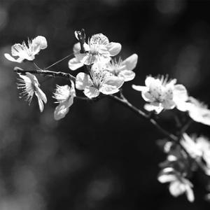 Spring In B And W by Incredi