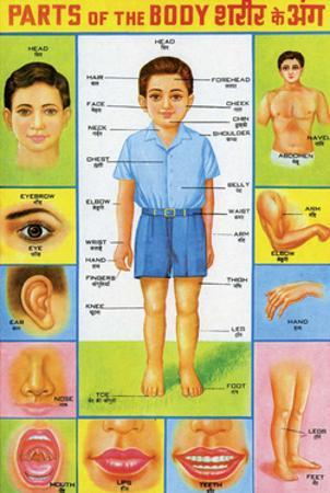 Indian Educational Chart - Parts of the Body