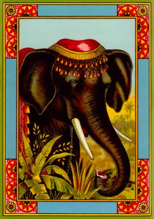 Indian Elephant with Beanie