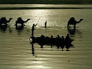 Indian Farmers Carry Watermelon across the River Ganges on their Camels in Allahabad, India