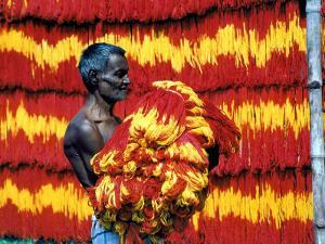Indian Muslim Artisan Carries Freshly Dyed Kalawa