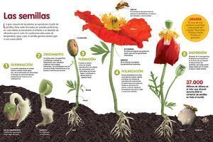 Infografía Acerca Del Proceso De Transformación De Semilla a Planta