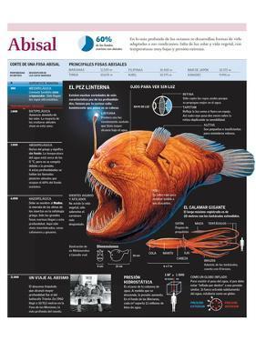 Infografía De La Fauna De Las Fosas Abisales Con Detalle Sobre El Pez Linterna