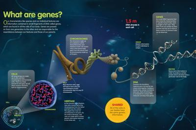 Infographic About Genes, their Function, Structure and Location in Human Cells