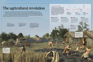Infographic About the Development Agricultural and Farming Techniques of the Neolithic (8000 BC)