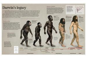 Infographic About the Impact of the Evolution Theory by Darwin in Science and Theology