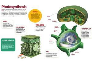 Infographic About the Photosynthesis and the Organs and Cells of the Plant
