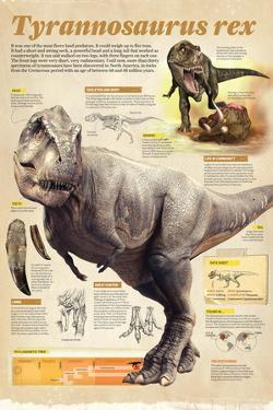 Infographic About the Tyrannosaurus Rex, a Predator That Lived During the Cretaceous Period