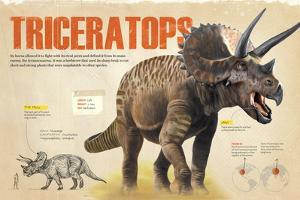 Infographic About Thetriceratops, Dinosaur from the Cretaceous Period of the Mesozoic Era