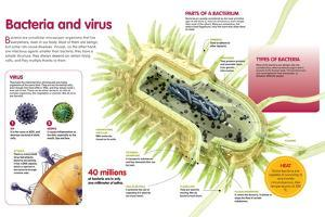 Infographic About Virus and Bacteria