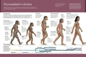 Infographic, from Australopithecus to Homo Sapiens (From 4 Million Years to 150,000 Ago)