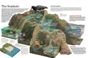Infographic of the Animal Life That Thrives on the Maritime Coasts