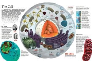 Infographic of the Composition of the Human Cell and the Principal Cell Theories