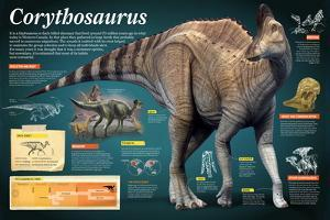 Infographic of the Corythosaurus, an Hadrosaurus That Lived During the Late Cretaceous Period