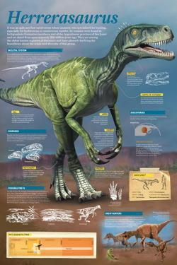 Infographic of the Herrerasaurus, a Carnivore Dinosaur That Lived at the End of the Middle Triassic