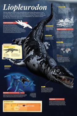 Infographic of the Liopleurodon, One of the Main Marine Predators of the Jurassic