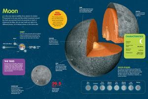 Infographic of the Moon. its Phases, Seas, Faces, Movements, and the Tides