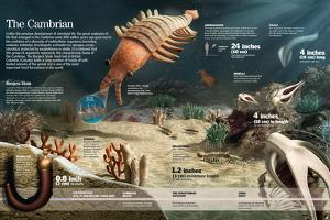 Infographic of the Multicellular Organisms That Inhabited the Earth in the Cambrian Period
