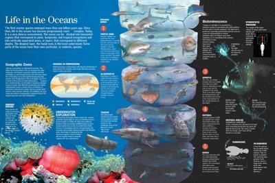 Infographic of the Species Which Inhabit the Oceans According to the Climate Conditions
