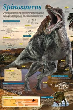 Infographic of the Spinosaurus, One of the Largest known Theropods of the Cretaceous Period