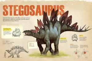 Infographic of the Stegosaurus, a Herbivorius Dinosaur from the Ornithischia Family (Jurassic)