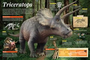 Infographic of Triceratops, an Herbivorous Dinosaur That Lived During the Late Cretaceous Period