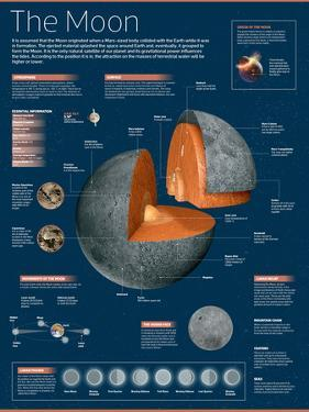 Infographic on the Moon: its Atmosphere, Composition, Lunar Movements, Lunar Phases and More