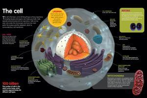 Infographic Where the Parts of a Cell are Described, its Types and its Functions