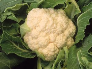Casa Blanca Cauliflower by Inga Spence