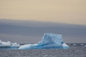 Antarctica. Brown Bluff. Bright Blue Iceberg by Inger Hogstrom