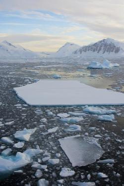 Antarctica. Near Adelaide Island. the Gullet. Ice Floes and Brash Ice by Inger Hogstrom