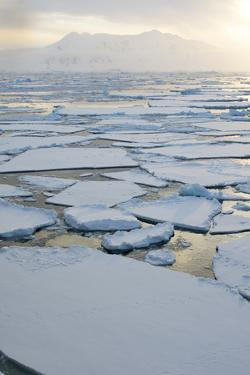 Antarctica, Near Adelaide Island. the Gullet. Ice Floes and Brash Ice by Inger Hogstrom