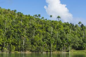Cuba. Artemisa. Las Terrazas. UNESCO Biosphere Preserve and Eco-Community in the Rosario Mountains by Inger Hogstrom