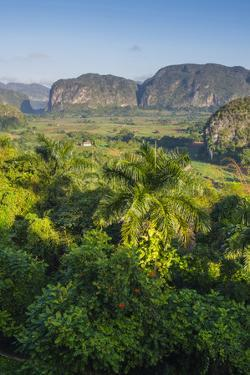 Cuba. Pinar Del Rio. Vinales. the Vinales Valley in the Early Morning by Inger Hogstrom