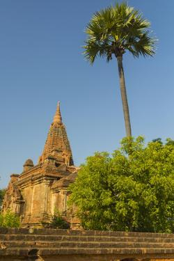 Myanmar. Bagan. Temple with a Palm Tree Towering Above by Inger Hogstrom