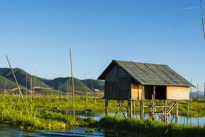 Myanmar. Shan State. Inle Lake. Floating Farm by Inger Hogstrom